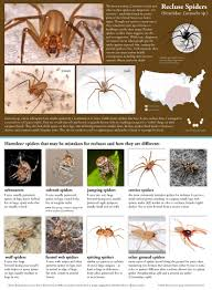Brown Recluse Map Recluse Or Not Spiderbytes