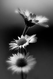 16 best black and white photos images on black white