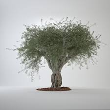 3d model of big olive tree растения 3d models and big