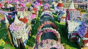 dubai miracle garden world u0027s largest flower garden cnn travel