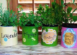 indoor herb kits stunning window garden rustic herb kit with