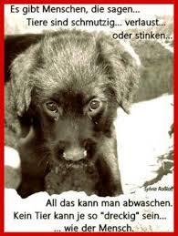 lustige hundesprüche 291 besten hund bilder auf katzen glückliche hunde
