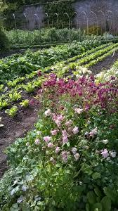 Kitchen Gardens Design 409 Best Garden Potagers Images On Pinterest Veggie Gardens