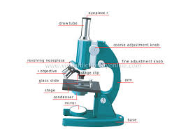compound light microscope function compound light microscope drawing at getdrawings com free for