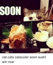 Soon Cat Meme - soon cat cats catacular soon sushi win roar cats meme on me me