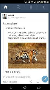 Meme Giraffe - the best giraffe memes memedroid
