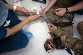 dog center europe treats soldiers u2014 the canine kind u2014 injured in