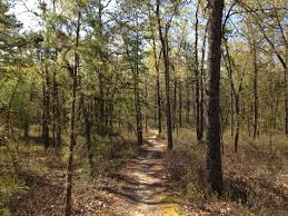 New Jersey forest images Batona trail jpg