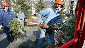 mass fire officials urge safe christmas tree disposal cbs boston