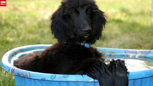 afghan hound club of st louis past 12 months warmest ever recorded in united states cnn