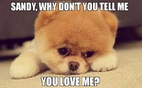 Love Me Meme - sandy why don t you tell me you love me meme sad puppy 77184