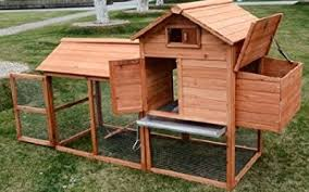 Best Backyard Chicken Coops by All You Need To Know About Keeping Chickens