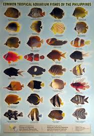 cool aquarium fish species aquarium fish pinterest aquarium