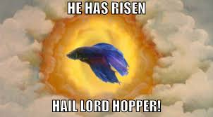 He Is Risen Meme - vanity and wisdom a real fish appears to be playing pokémon right