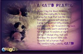 pet prayer nadiya loving every moment a cat s prayer