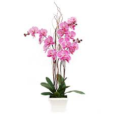 pink orchids orchids flowers delivery malaysia fa4023 blooming pink pot