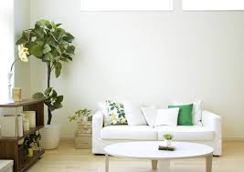 biggest house plants 6 indoor houseplants you need for better air quality