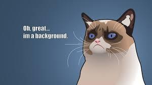 Angry Cat Meme Good - grumpy cat wallpaper 7 1920纓1080 grumpy cat pinterest cat