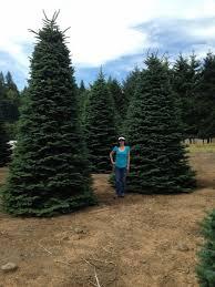 15 ft tree trees are beautiful however