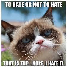 Grumpy Cat Meme No - it s no question for grumpy cat cats pinterest grumpy cat cat