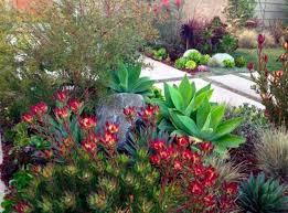 landscaping with succulents plant ideas u2014 porch and landscape ideas