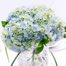 hydrangea centerpiece hydrangea centerpieces beautiful and delicate arrangements with a