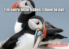 Puffin Meme - canadian puffin meme by bails22 cb memedroid