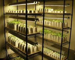 lights of america grow light colored warm white compact fluorescent lights bulbs for growing plant