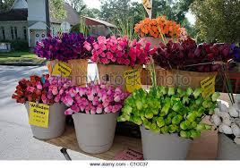 Roses For Sale Colorful Sale Made Fake Flowers Stock Photos U0026 Colorful Sale Made