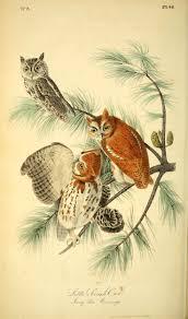206 best birds pictures by j j audubon images on pinterest