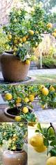 best 25 gardening ideas on pinterest organic gardening tips