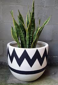 Plant Vase Best 25 Snake Plant Ideas On Pinterest Palm House Plants Where