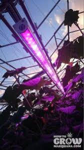 best led grow lights high times 2017 led grow lights