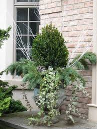 use ivy in winter garden container fall planters box wood ivy