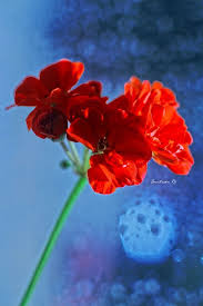 263 best red u0026 blue images on pinterest red and blue red
