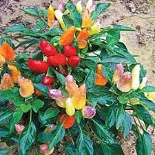 balkon kã bel 22 best balkon images on balcony plants and vegetable
