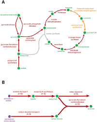 characterizing the metabolism of dehalococcoides with a constraint