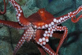 what it u0027s like to be an octopus caretaker