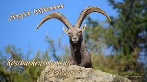 Reha Bad Mergentheim Kostbarkeitsmomentetierfotografie Der Fuchs Im Wildpark Bad