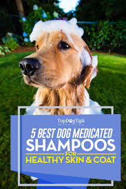 top 5 best medicated dog shampoo in 2017 skin and itching issues