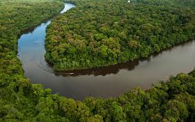 amazon rainforest u0027jungle u0027 u0027s critical food