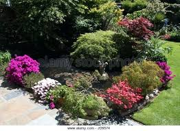 patio plants patio plants around a pond stock image plants for