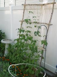 leaning string bean trellis bean trellis gardens and garden ideas