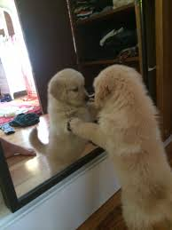 Looking In The Mirror Meme - puppy sees itself in mirror for the first time dogs know your meme