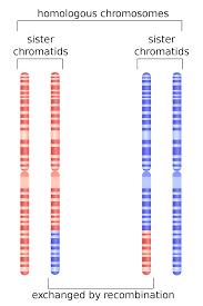 homologous recombination wikipedia