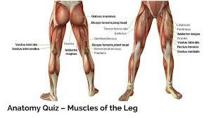 Abdominal Anatomy Quiz Anatomy Quiz Archives Parallel Coaching Uk U0027s 1 Personal Trainer