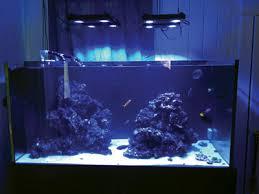 Saltwater Aquascaping Mr Saltwater Tank U0027s 235 Gallon Reef Challenge Part 3 Details