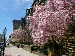 Massachusetts where to travel in march images The mature traveller march 2011 jpg