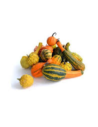 ornamental squash seeds greenmylife anyone can garden