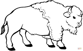 young bison coloring page free printable coloring pages